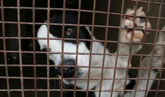 Tarnobrzeg: Pomagają zwierzętom. Szukają wolontariuszy.