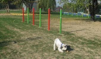 Kolbuszowa: Chce parku dla psów.