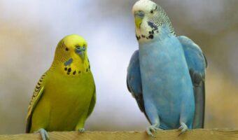 Mielec: Wystawa egzotycznych ptaków